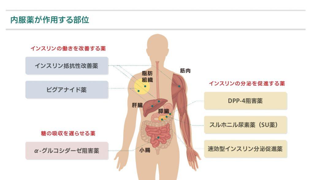薬の作用する部位図